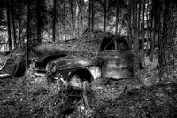 Old Car covered in Pine Needles B&W