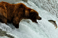 Brown Bears of Katmai-Brooks Falls
